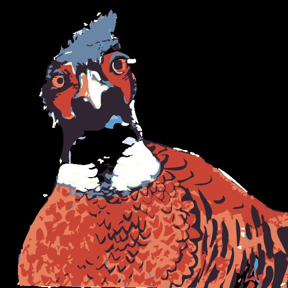 Cock bird - buy cider online